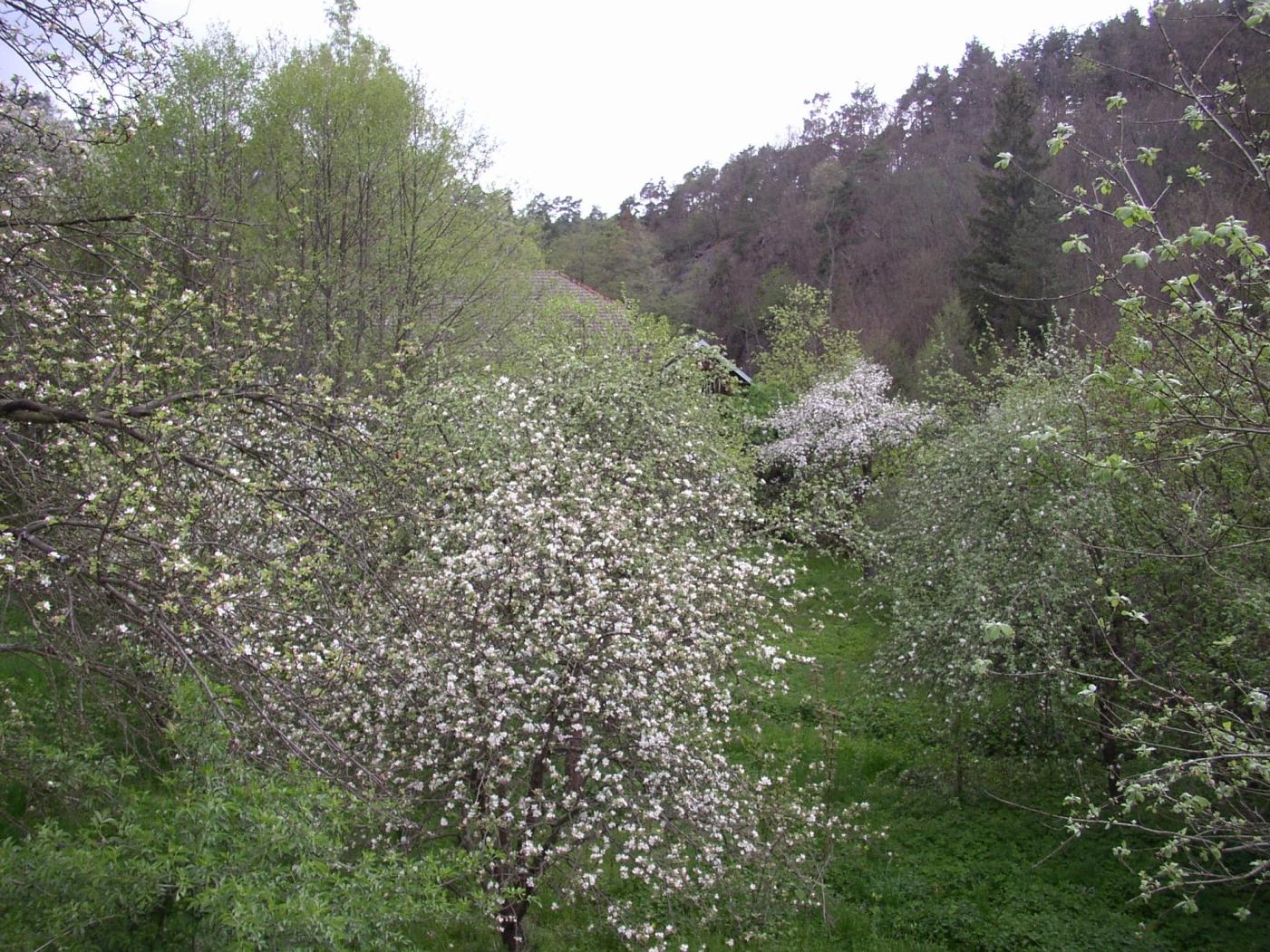Marmeládový mlýn
